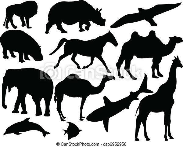 animal collection - vector - csp6952956
