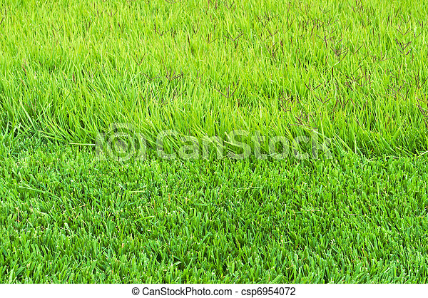 border trimmed and overgrown grass  - csp6954072