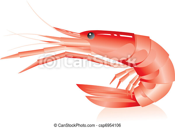 shrimp on a white background - csp6954106