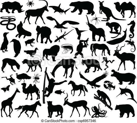 Animals collection - csp6957346
