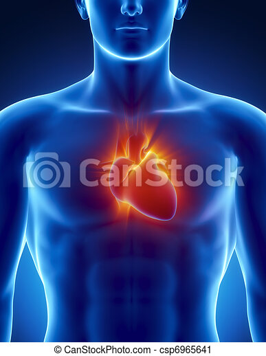 Human heart in detail with glowing rays - csp6965641