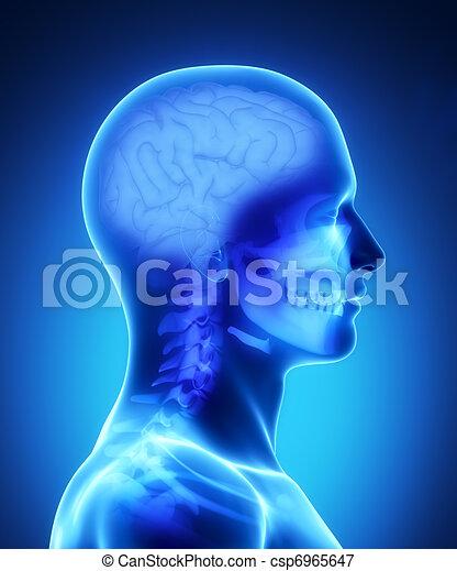 Human brain x-ray view - csp6965647