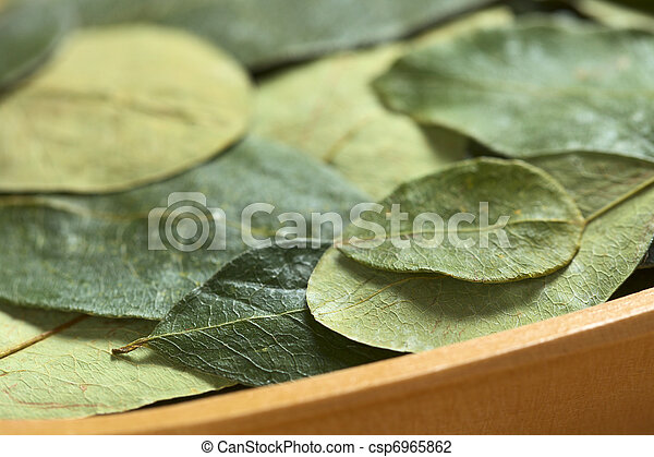 Dried coca (lat. Erythroxylum coca) leaves in a wooden bowl. In Peru coca leaves are drunk as tea and they are traditionally chewed in the mountains to help against altitude sickness (Selective Focus, - csp6965862