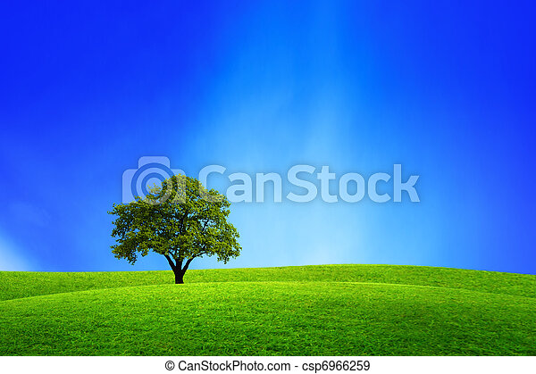 Oak tree in nature - csp6966259