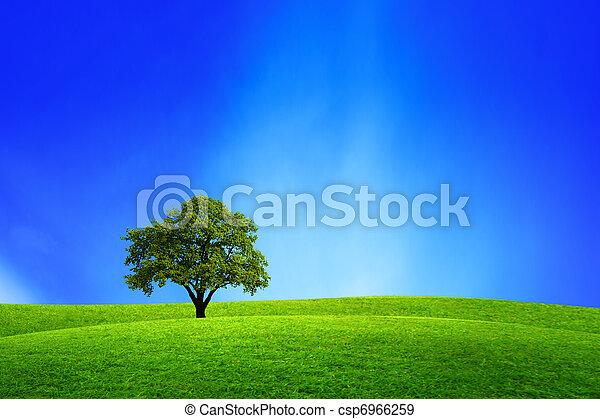 Oak tree in nature - csp6966259
