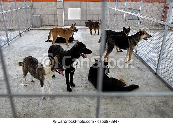 Homeless dogs shelter - csp6973947
