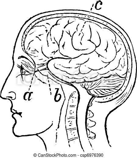 Optic Nerve, vintage engraved illustration - csp6976390