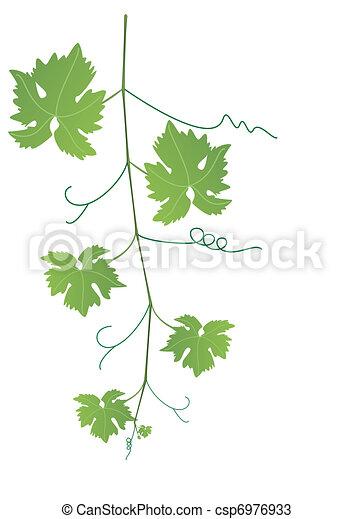 Vecteurs de feuilles raisin vigne vecteur vigne et feuilles csp6976933 recherchez des - Feuille de vigne dessin ...