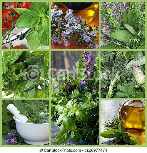 Herbs Collage - csp6977474