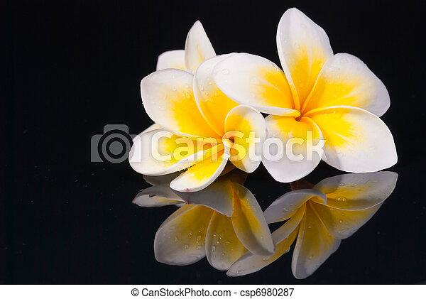 Leelawadee flower and its reflecio - csp6980287