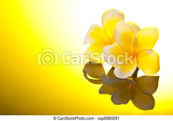 Two yellow Leelawadee flowers under sunshine - csp6980291