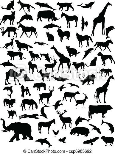 Collection of animals - csp6985692