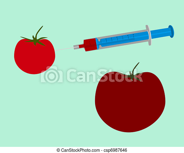 Illustration of genetic engineering of a tomato on green background - csp6987646
