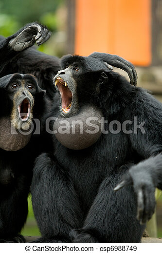 Stock Photographs of Screaming Monkeys - Very excited ...