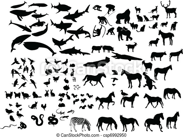Collection of animals - csp6992950