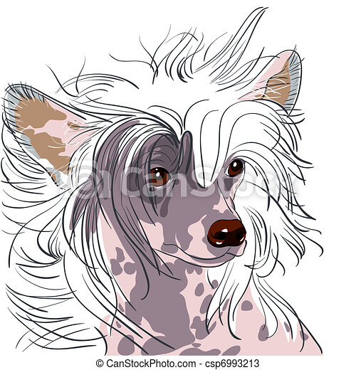 vector dog Chinese Crested breed - csp6993213