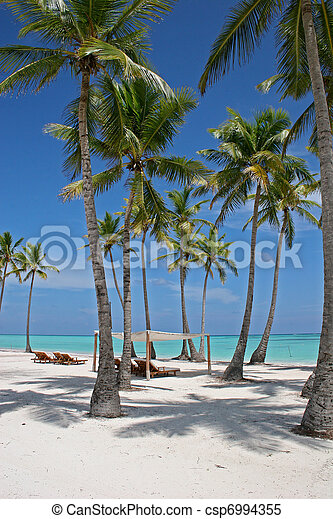 Palm trees on tropical beach - csp6994355