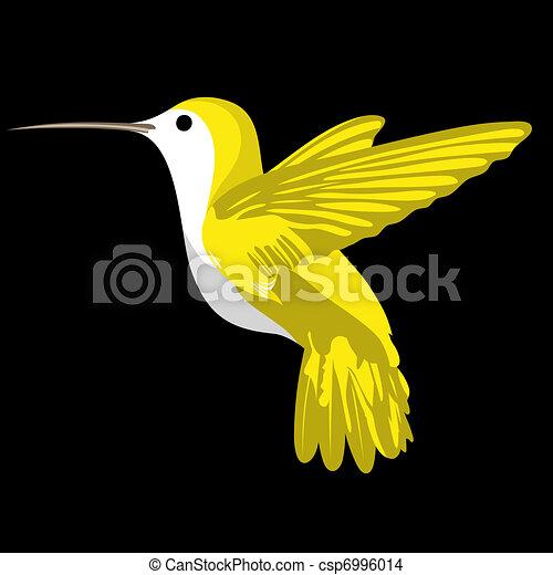 humming bird  - csp6996014