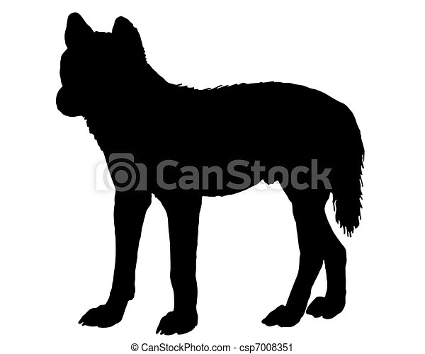 Australian Dingo - csp7008351