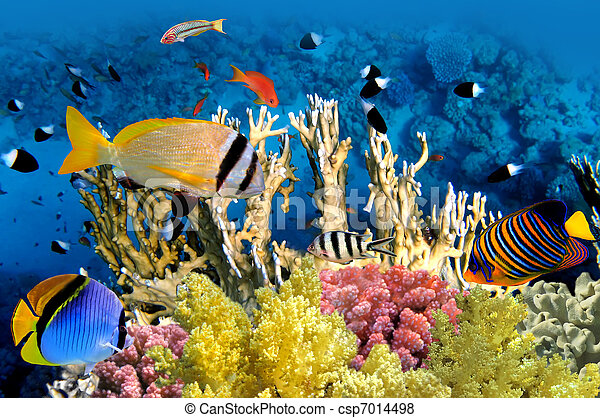Tropical Fish and Coral Reef - csp7014498