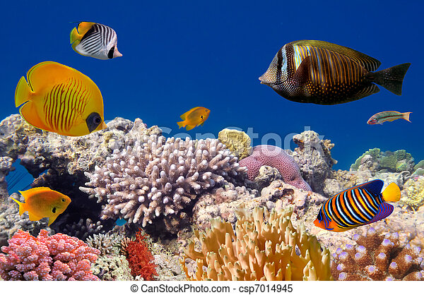 Underwater life of a hard-coral reef - csp7014945