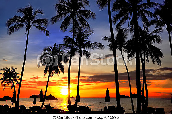 Coconut palms on sand beach in tropic on sunset - csp7015995