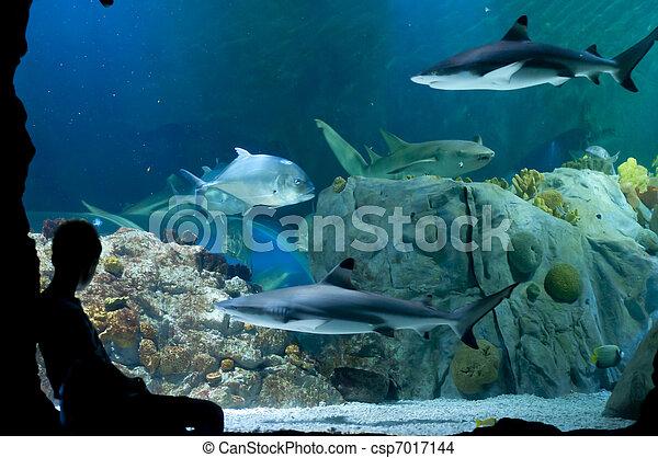 Imagine being a shark?! - csp7017144