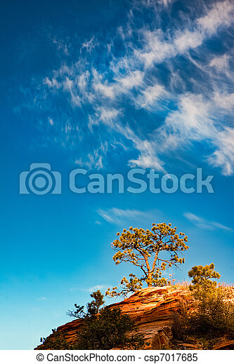 Pine tree growing on a rocky outcrop in Zion National Park - csp7017685