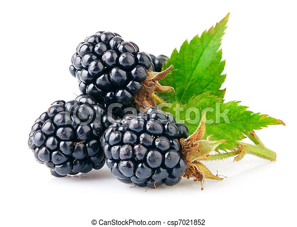 berry blackberry with green leaf - csp7021852