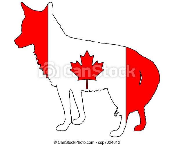 Coyote Canada - csp7024012