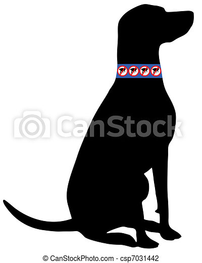 Dog with flea collar - csp7031442