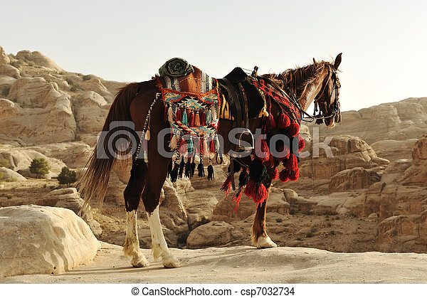 Arabian horse in Petra with traditional clothes, Jordan - csp7032734
