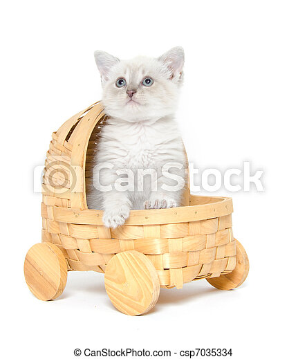 Cute kitten in a stroller - csp7035334