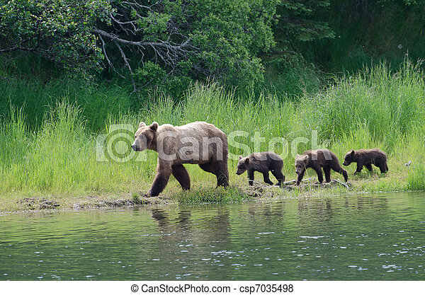 Female Alaskan brown bear with cubs  - csp7035498