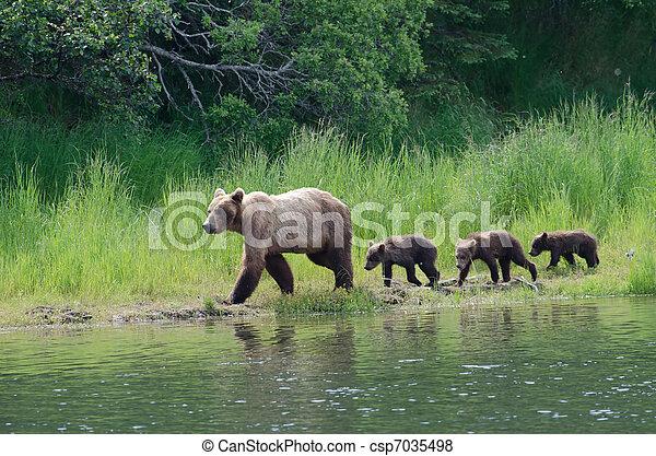 Female Alaskan brown bear with cubs - csp7035498