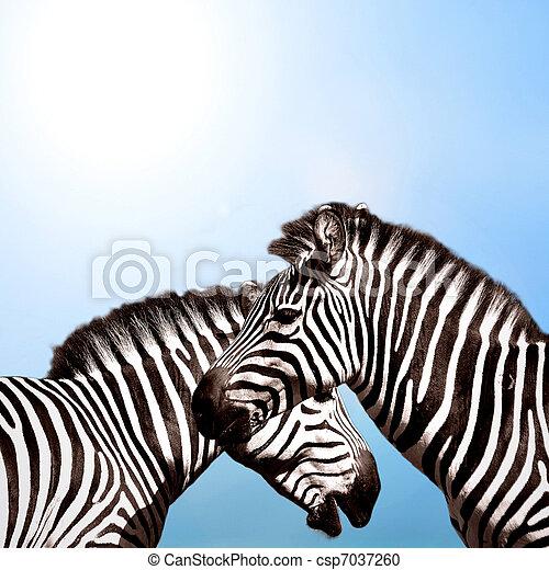 himmelsgewölbe, zwei,  Zebras - csp7037260