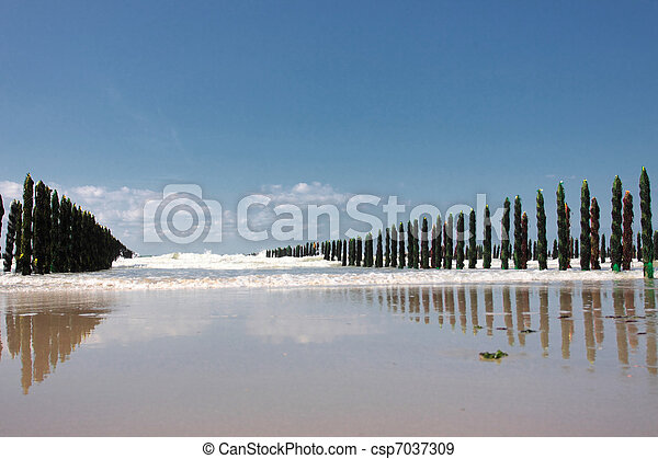 mussel sea on the coast of opal in France