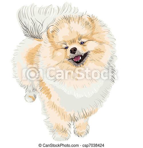 spitz dog smiles - csp7038424