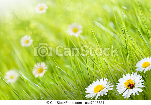 grass background with daisies flowers and one ladybird, this is a sunny day - image is blurry on the left side for copy space - csp7045821