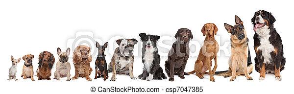 Zwölf, hunden, Reihe - csp7047385