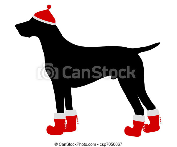 German Shorthaired Pointer with red christmas cap and boots - csp7050067