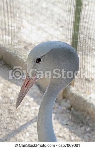 Crane bird - csp7069081