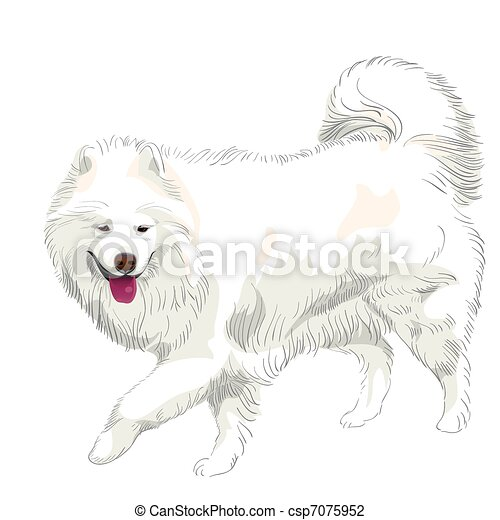 vector purebred Samoyed dog smile - csp7075952