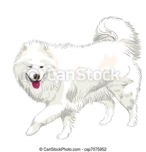 vector purebred Samoyed dog smile - csp7075952