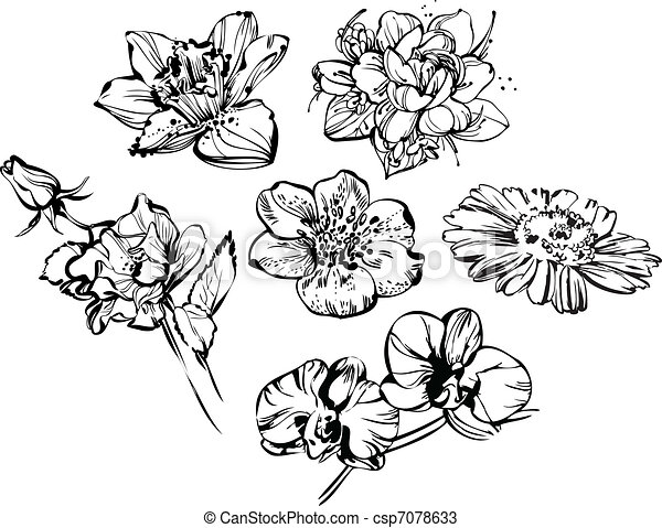 Parts Of Plants Worksheet additionally Plant Parts Worksheet 3rd Grade further Flower Garden Coloring Pages For Kids additionally Absinthe Plante Artemisia Absinthium Ou Absinthe Gravure 5889588 additionally Search. on flower garden flowers html