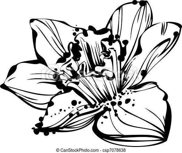 sketch bud Narcissus - csp7078638