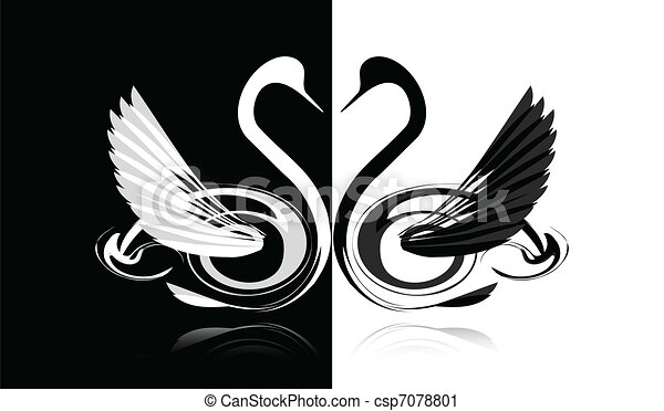 Black and white swan - csp7078801