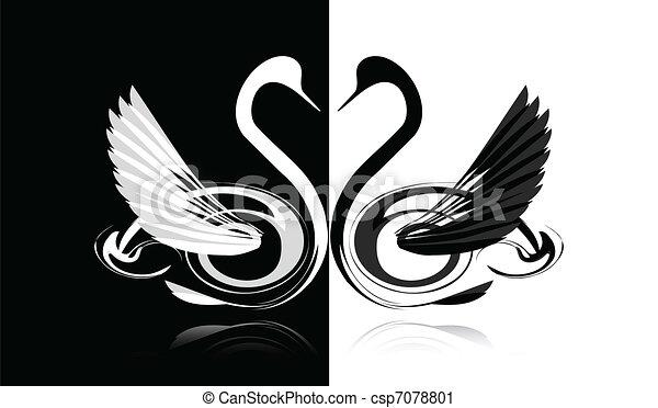 Black and white swan - csp7078801