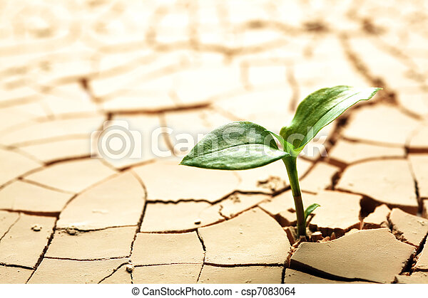 Plant in dried cracked mud - csp7083064