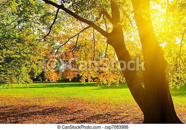 Sunlighted yellow autumn tree in a park - csp7083986
